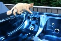 """Mr. Banks reportedly planned to kill the attorney using a cat, a radio and a hot tub. CC image Screen Capture from Youtube video """"Cat falls in Hot Tub"""" by Jeff Martin"""